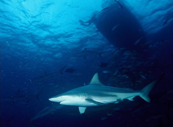 florida condo pool shark photo